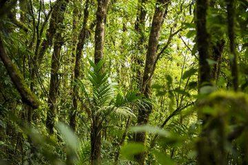 Brasil avança na emissão de Títulos Verdes e atrai investidores internacionais