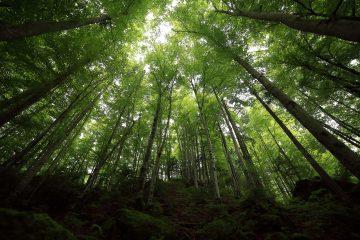 Novo Código Florestal completa nove anos nesta terça com avanços na Lei